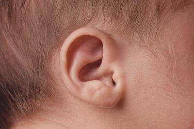 A macro shot of a fuzzy, newborn ear