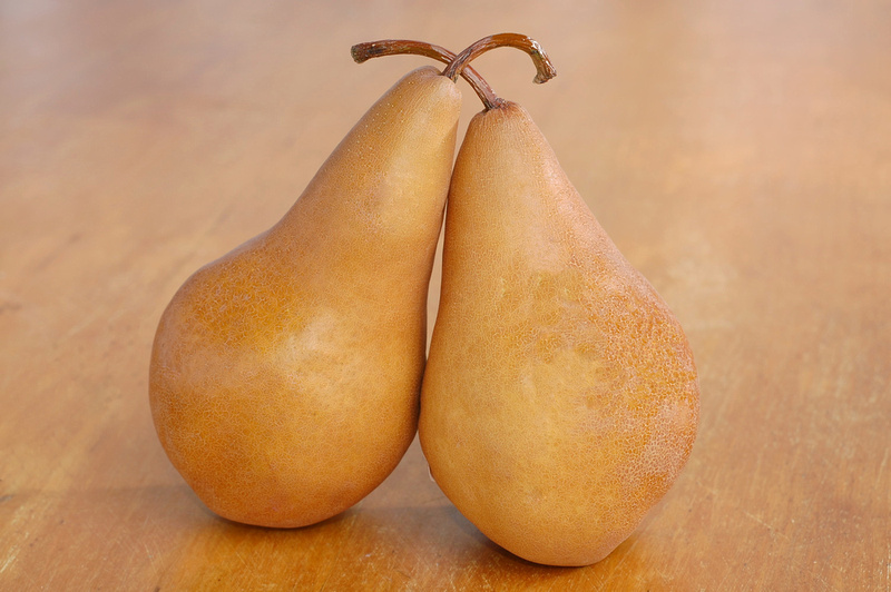 an image of two bosc pears