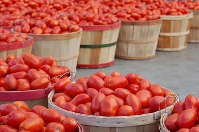an image of bushels of ripe, juicy plum italian tomatoes at a farmer